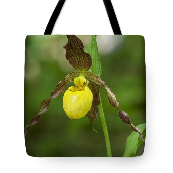 Large Yellow Lady Slipper Orchid Dspf0251 Tote Bag