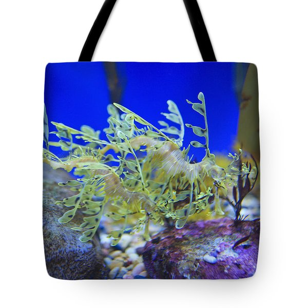 Leafy Seadragon Phycodurus Eques At The Tote Bag by Stuart Westmorland