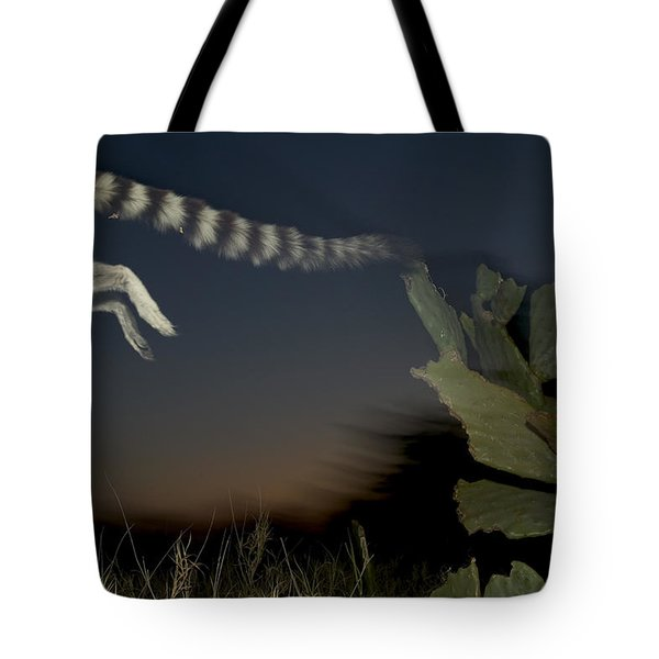 Leaping Ring-tailed Lemur  Tote Bag by Cyril Ruoso