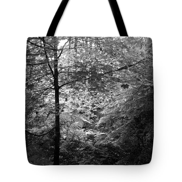 Light In The Woods Tote Bag by Kathleen Grace