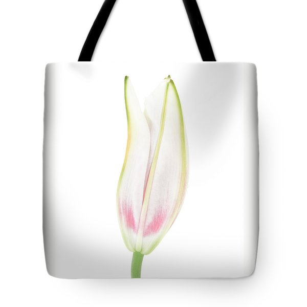 Lily In The Snow Tote Bag