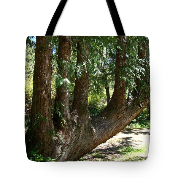 Limbs To Trees Tote Bag by Nick Kloepping