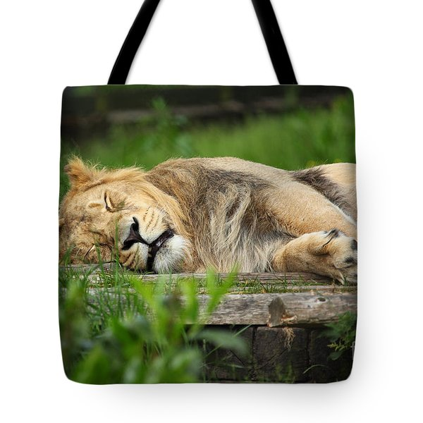 Lioness Sleeping Tote Bag