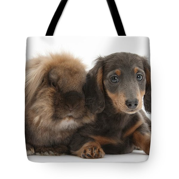Lionhead-cross Rabbit And Dachshund Pup Tote Bag by Mark Taylor