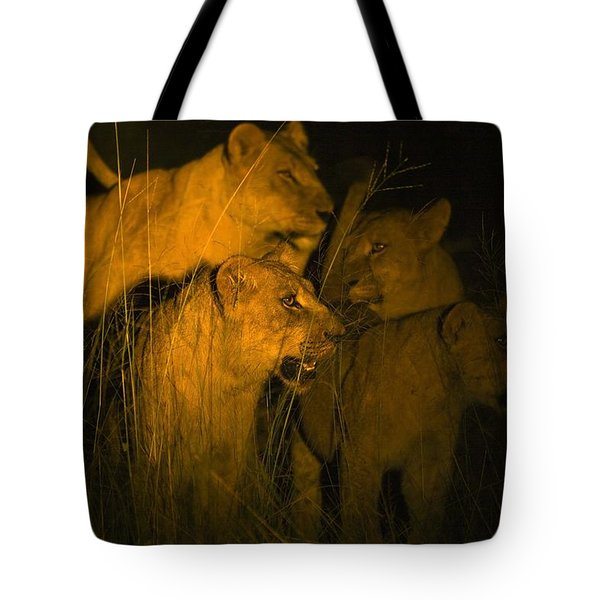 Lions At Night Tote Bag by Carson Ganci