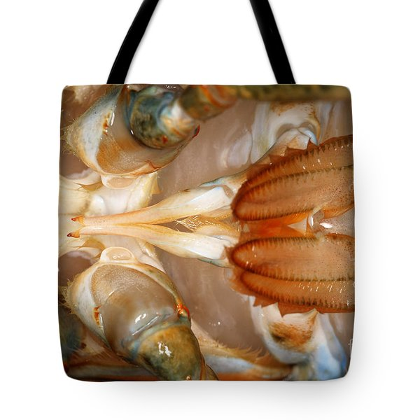 Lobster Male Sex Organs Tote Bag by Ted Kinsman