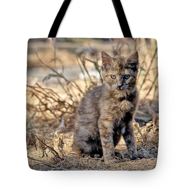Lone Feral Kitten Tote Bag