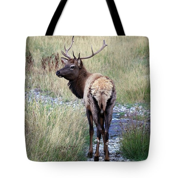 Tote Bag featuring the photograph Looking Back Bull by Steve McKinzie