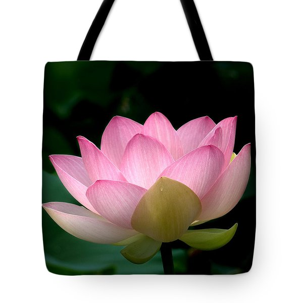 Lotus Beauty--blushing Dl003 Tote Bag