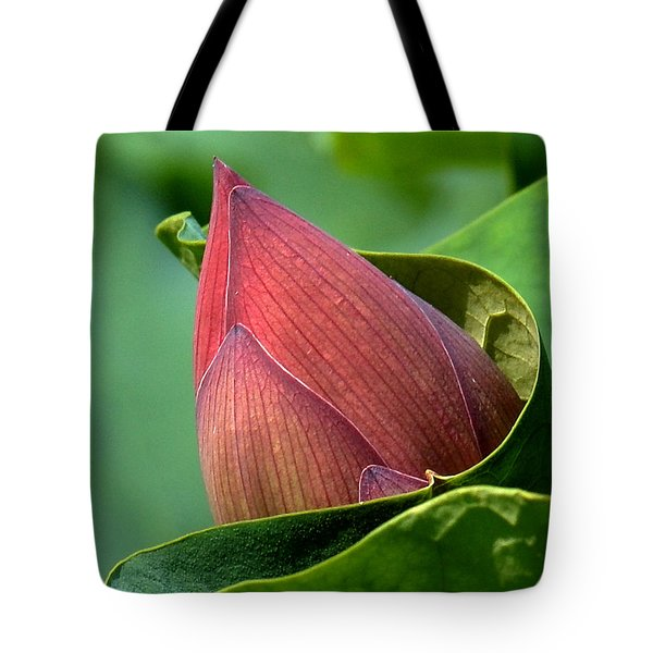 Lotus Bud--bud In A Blanket Dl049 Tote Bag