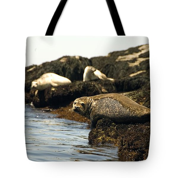 Lounging Seals Tote Bag by Rick Frost