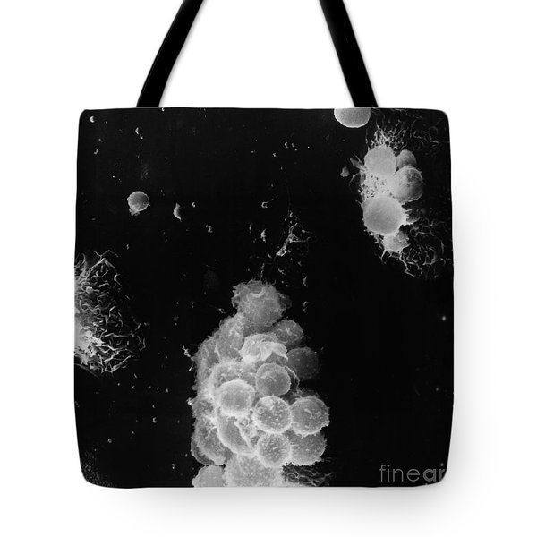 Macrophages Interacting With Lymphocytes Tote Bag