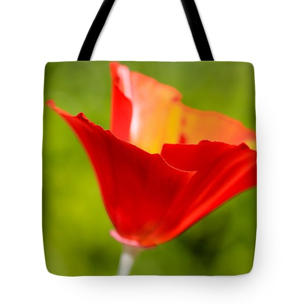 Mahogany California Poppy V Tote Bag by Heidi Smith