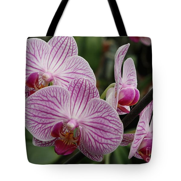Majestic Orchids Tote Bag by Carol Groenen