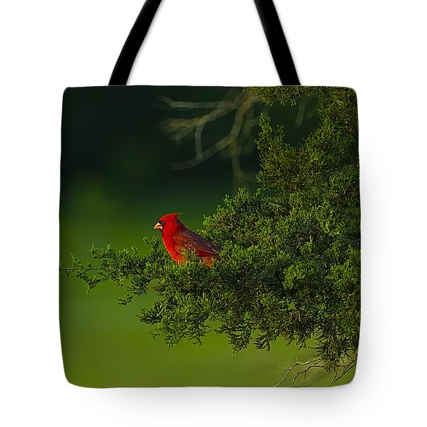 Male Cardinal In Pine Tree Tote Bag