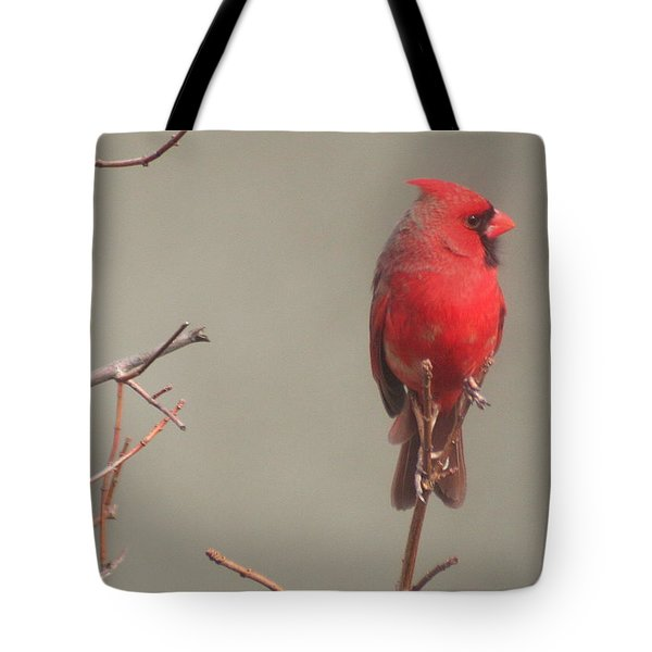 Tote Bag featuring the photograph Male Cardinal On A Branch by Laurel Talabere