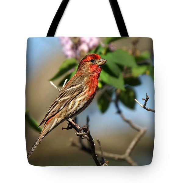 Male Finch Tote Bag by Alan Hutchins