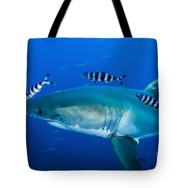 Male Great White Shark And Pilot Fish Tote Bag by Todd Winner