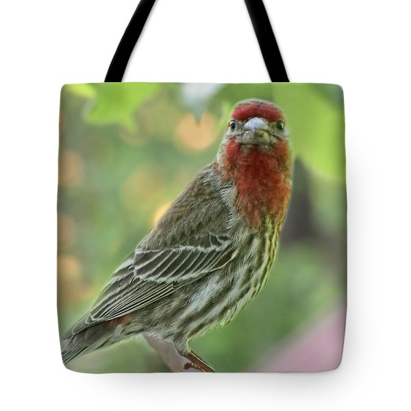 Tote Bag featuring the photograph Male House Finch by Debbie Portwood