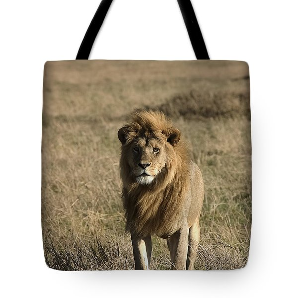 Male Lion's Gaze Tote Bag by Darcy Michaelchuk
