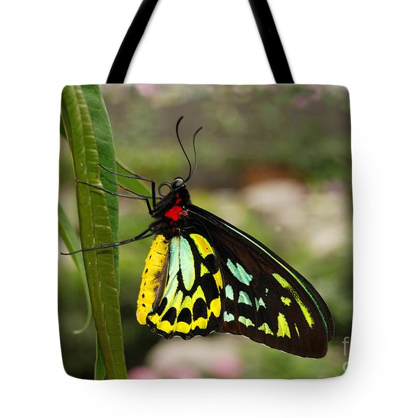 Tote Bag featuring the photograph Male New Guinea Birdwing Butterfly by Eva Kaufman