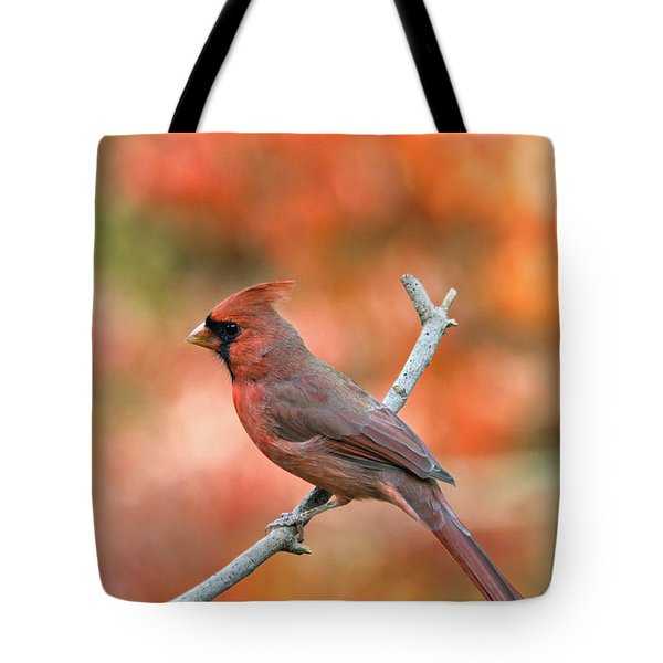 Male Northern Cardinal - D007810 Tote Bag by Daniel Dempster