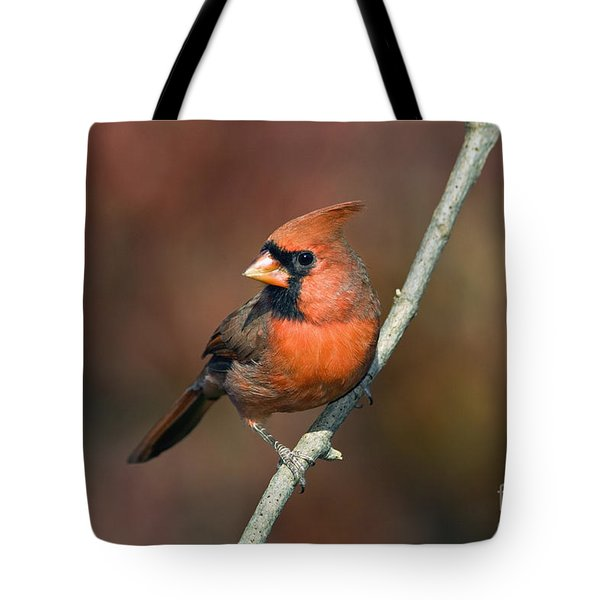 Male Northern Cardinal - D007813 Tote Bag by Daniel Dempster