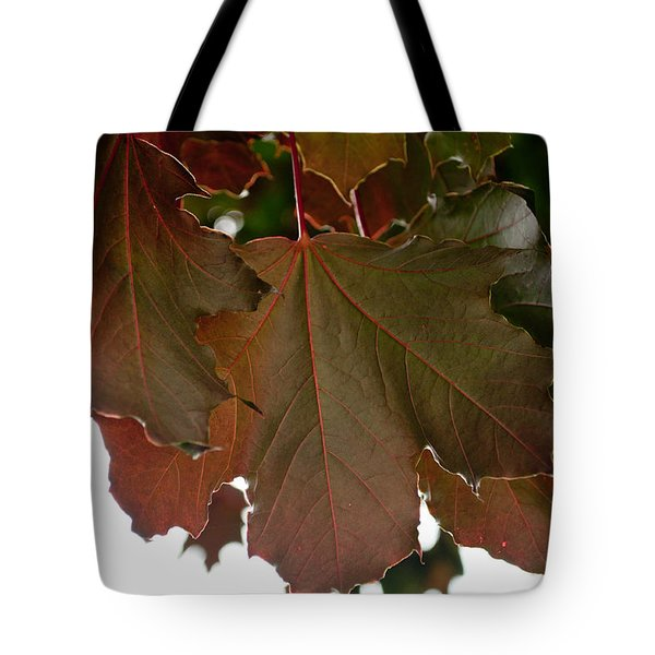 Tote Bag featuring the photograph Maple 2 by Tikvah's Hope