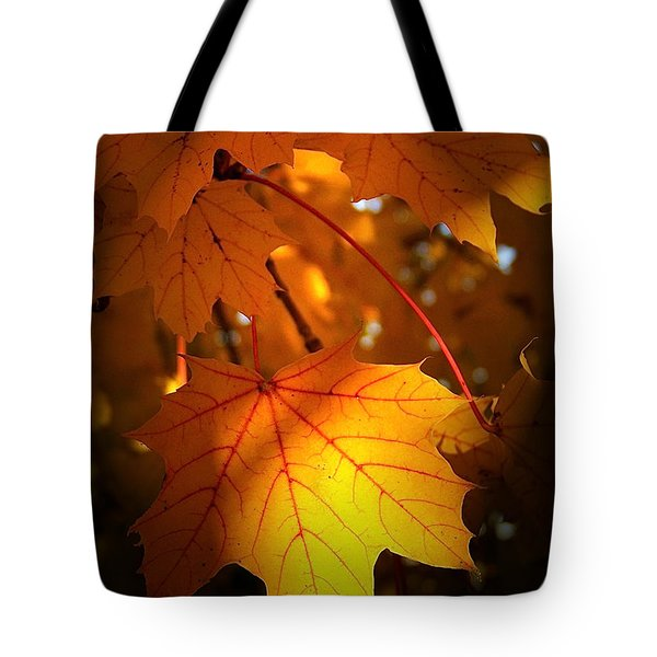 Maple At First Light Tote Bag
