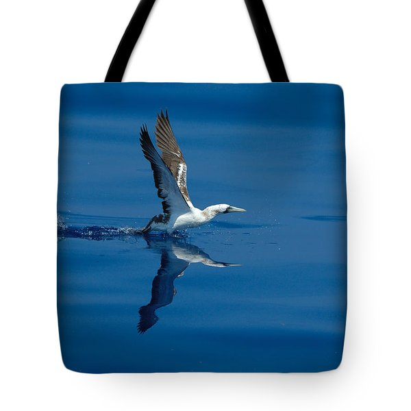 Masked Booby Tote Bag