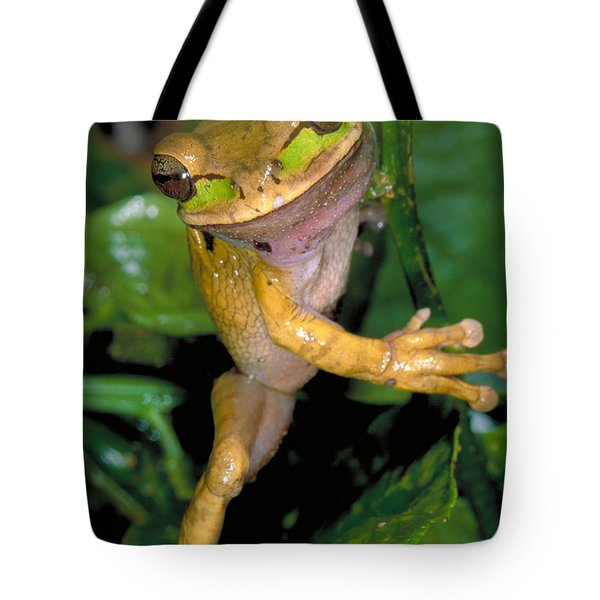 Masked Treefrog Tote Bag by Gregory G. Dimijian