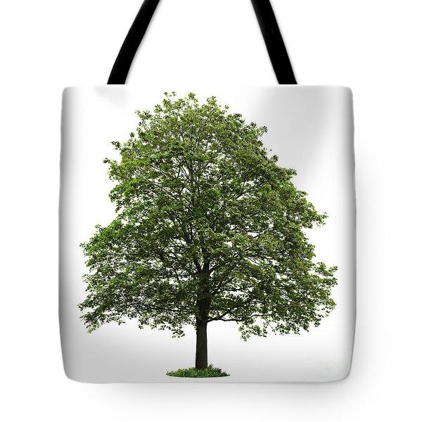 Mature Maple Tree Tote Bag by Elena Elisseeva