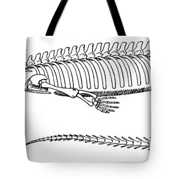 Mesosaurus Brasiliensis Tote Bag by Science Source