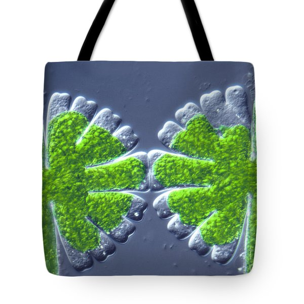 Micrasterias Rotata Tote Bag by M. I. Walker
