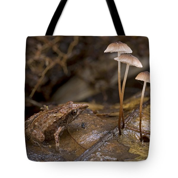 Microhylid Frog Papua New Guinea Tote Bag by Piotr Naskrecki