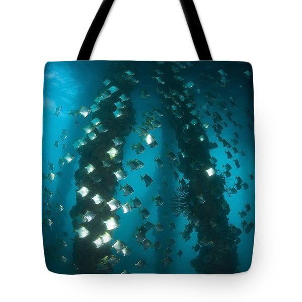 Milkfish, Dumaguete Pier, Philippines Tote Bag by Stuart Westmorland