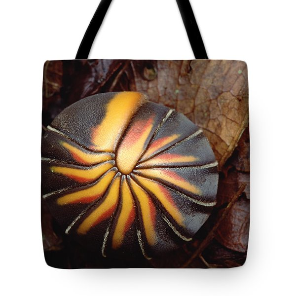 Millipede Rolled Into Ball Position Tote Bag by Mark Moffett