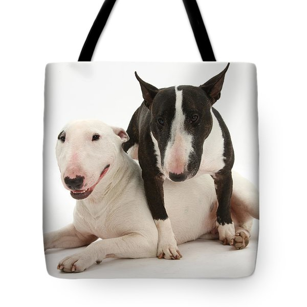 Miniature Bull Terrier Bitch, Lily Tote Bag by Mark Taylor