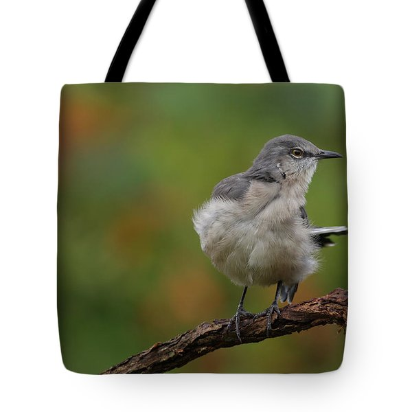 Mocking Bird Perched In The Wind Tote Bag by Daniel Reed