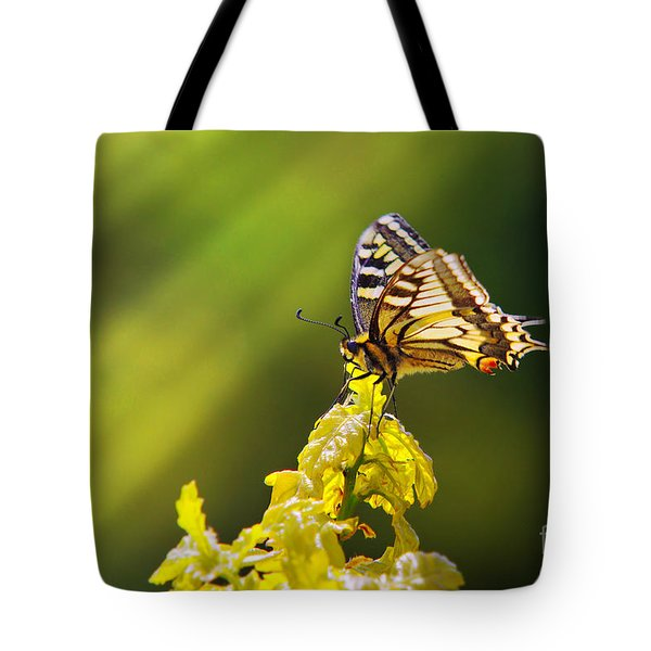 Monarch Butterfly Tote Bag by Carlos Caetano