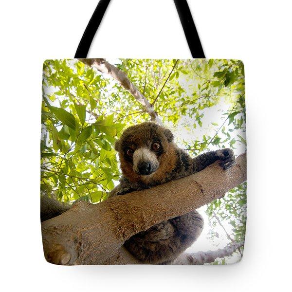Mongoose Lemur Tote Bag