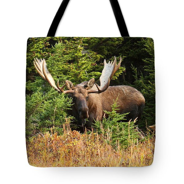 Tote Bag featuring the photograph Monster In The Hemlocks by Doug Lloyd