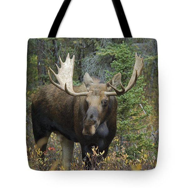 Moose Alces Alces In The Forest Alberta Tote Bag by Philippe Widling
