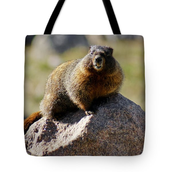 Morning Marmot Tote Bag