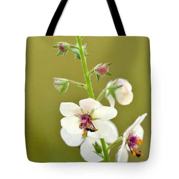 Tote Bag featuring the photograph Moth Mullein by JD Grimes