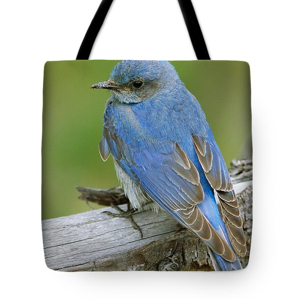 Mountain Bluebird Tote Bag by Doug Herr