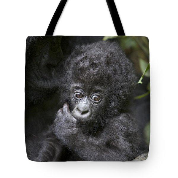 Mountain Gorilla 3 Month Old Infant Tote Bag by Suzi Eszterhas