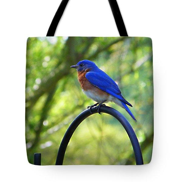 Mr Bluebird Tote Bag