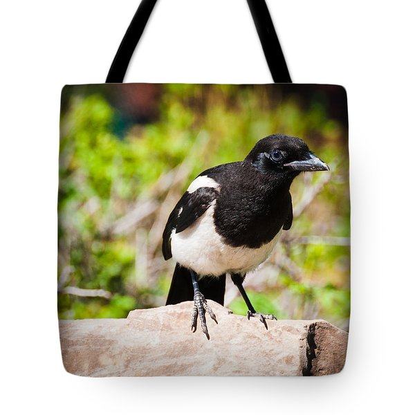 Tote Bag featuring the photograph Mr. Magpie by Cheryl Baxter