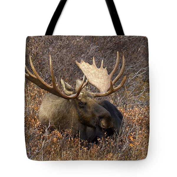 Tote Bag featuring the photograph Much Needed Rest by Doug Lloyd